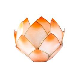 Lotus Crépuscule - Mandarine